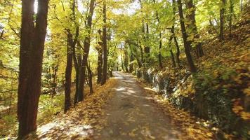 viagem fascinante pela floresta