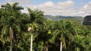 Blick auf kubanische Felder Berge Hügel Landschaft in Vinales Kuba