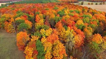 Flying over rural forest, colorful autumn treetops video