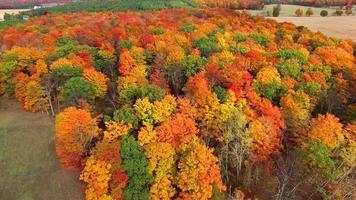 Fliegen über ländlichen Wald, bunte Herbstbaumkronen