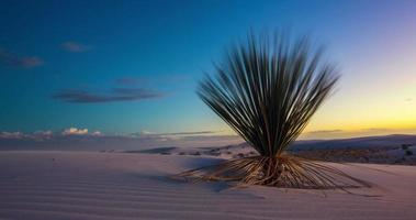 white sands time lapse cactus si sposta a destra