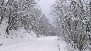 autostrada invernale a distanza nella foresta