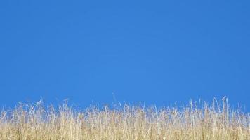 campo de verão com céu azul video
