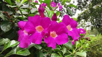 rosa Blumen, die im Wind schwanken