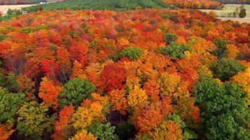 volando sobre bosques rurales, coloridas copas de los árboles otoñales video
