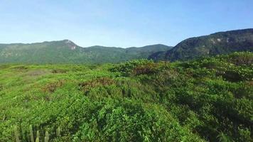 sobrevoar uma floresta intocada na américa do sul. montanhas do parque da Mata Atlântica.