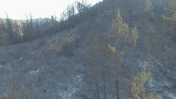 bosque despues del incendio