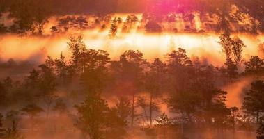 lasso di tempo di nebbia che sale da una foresta di zone umide