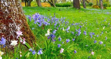 Frühlingsblumen im öffentlichen Park, grünes Gras