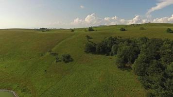 ripresa aerea del bellissimo paesaggio erboso con alberi