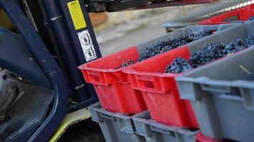 Carretilla elevadora moviendo una paleta de cajas de uvas durante la cosecha video