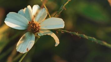 flor silvestre retroiluminada en 4k