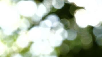 Blurred leaves on a tree