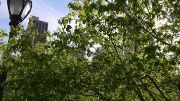 Usa sunny day new york central park tree leaves 4k