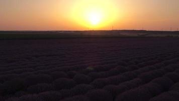 vista aérea de uma paisagem com campo de lavanda, foto do pôr do sol, vídeo