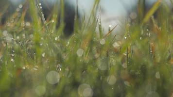 Extreme close-up of a meadow grass stems