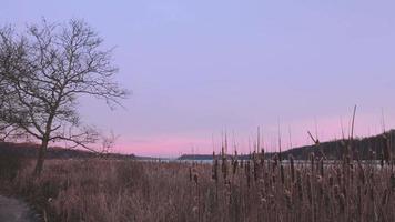 Morgensonnenaufgang der Bucht während des Winters mit Baum