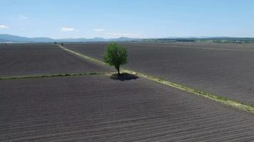 View of A Tree and Fields