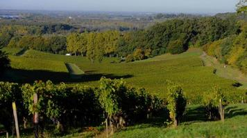 Beautiful Vineyard Landscape-Bordeaux Vineyard video