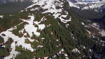 foto aérea de verão de uma floresta de montanha parcialmente coberta de neve video