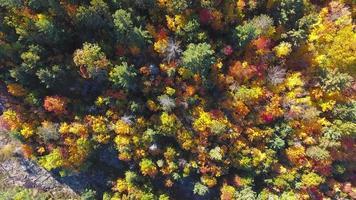 sopra gli alberi in autunno | ontario, canada