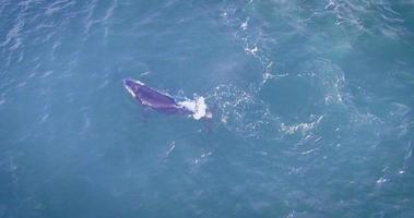 baleias video