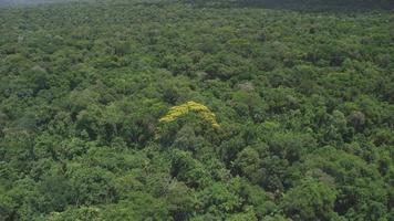 incredibile ripresa aerea di una foresta atlantica nel sud del brasile