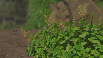 tourné, colibri, manger, fleur, de, a, plante tropicale