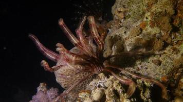 stella marina piuma di notte