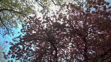 Sonnenstrahlen strömen durch den blühenden Baum