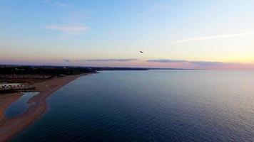 vários pássaros voando sobre a praia ao pôr do sol video