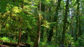 bosque verde profundo, helechos y paisajes de selva y musgo