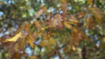 vista sobre la madera con hermoso follaje rojo. de cerca video