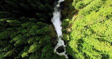 bem acima das cachoeiras naturais da floresta de pinheiros video