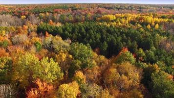 mirando hacia abajo a los colores del otoño, copas de árboles, bosques escénicos video