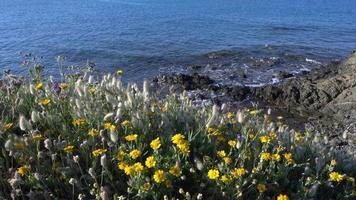 paesaggio fiorito, erba e fiori selvatici vicino al mar Egeo nella penisola di kassandra in grecia