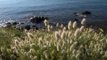 Blumenlandschaft, Gras und wilde Blumen in der Nähe des Ägäischen Meeres in der Halbinsel Kassandra in Griechenland