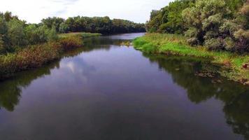 Luftaufnahme des Flusses im Wald video