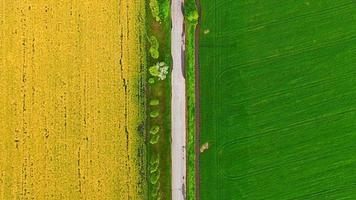 Luftaufnahme der Vorstadtstraße zwischen Raps und Weizenfeldern video