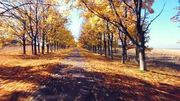 Luftaufnahme der Vorstadtstraße mit Herbstbäumen an den Rändern video