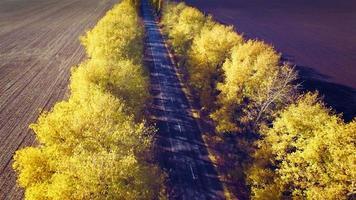 vista aerea della strada suburbana con alberi d'autunno sui bordi