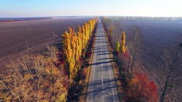 vista aerea della strada suburbana con alberi d'autunno sui bordi video