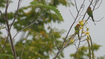 gruccione verde cercando di mangiare insetti