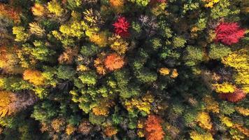 mirando hacia abajo a los colores del otoño, árboles, bosques escénicos video