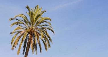 blauer Himmel sonniger Tag Palm Top 4k Spanien