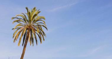 sonniger Tag des blauen Himmels, der Palmansicht 4k Spanien winkt