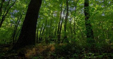 control deslizante motorizado de lapso de tiempo de bosque con sombras en movimiento. calidad raw dslr hdr
