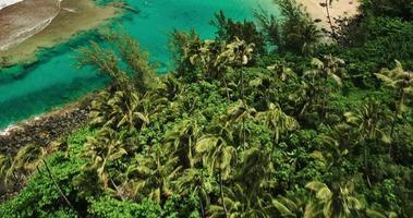 Luftaufnahme, die über Kokospalmen fliegt, die tropische blaue Lagune enthüllen