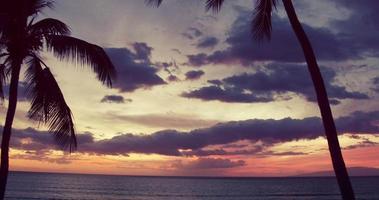 Fliegen durch Palmenschattenbild in den Sonnenuntergang.