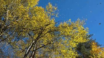 hojas amarillas en el viento video